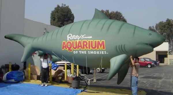 Shark Inflatable
